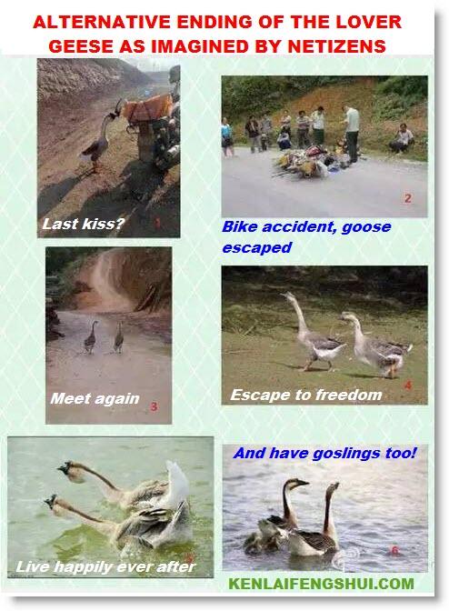 geese_alternate